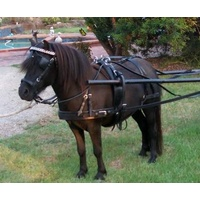 Heritage Driving Harness - pony